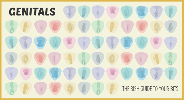 Genitals — The Bish Guide to Your Bits